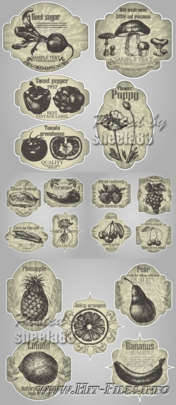 Vintage Food Labels Vector